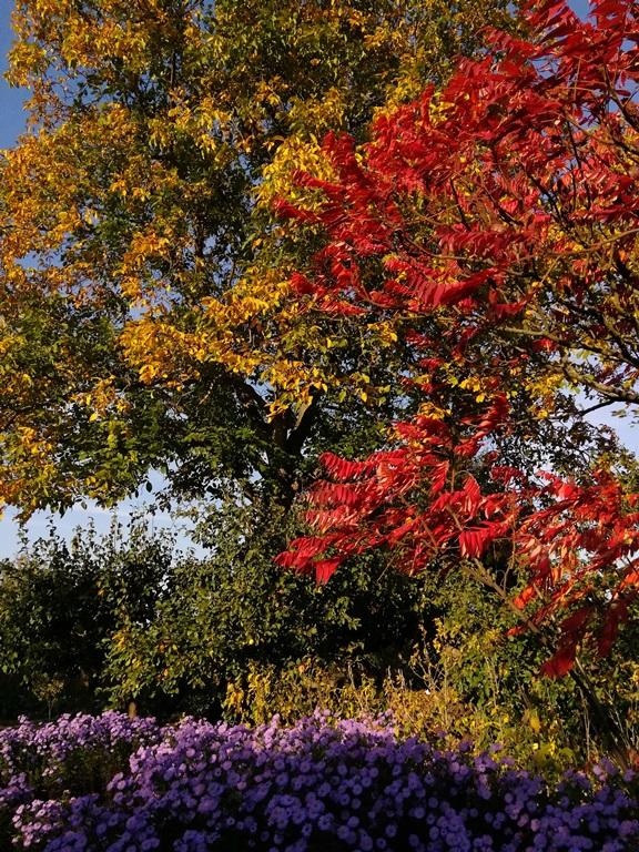 Herbstansicht 2018 Foto: Anja Herbst