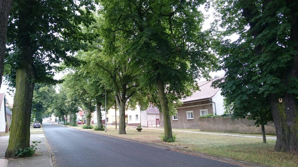 Dorfentwicklung - Die Liebenwerdaer Straße in Theisa von Bäumen gesäumt