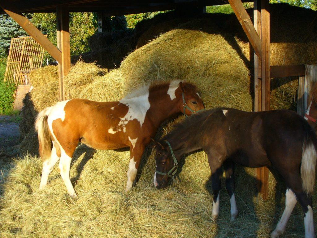 Familie Reidies und ihre Pferde
